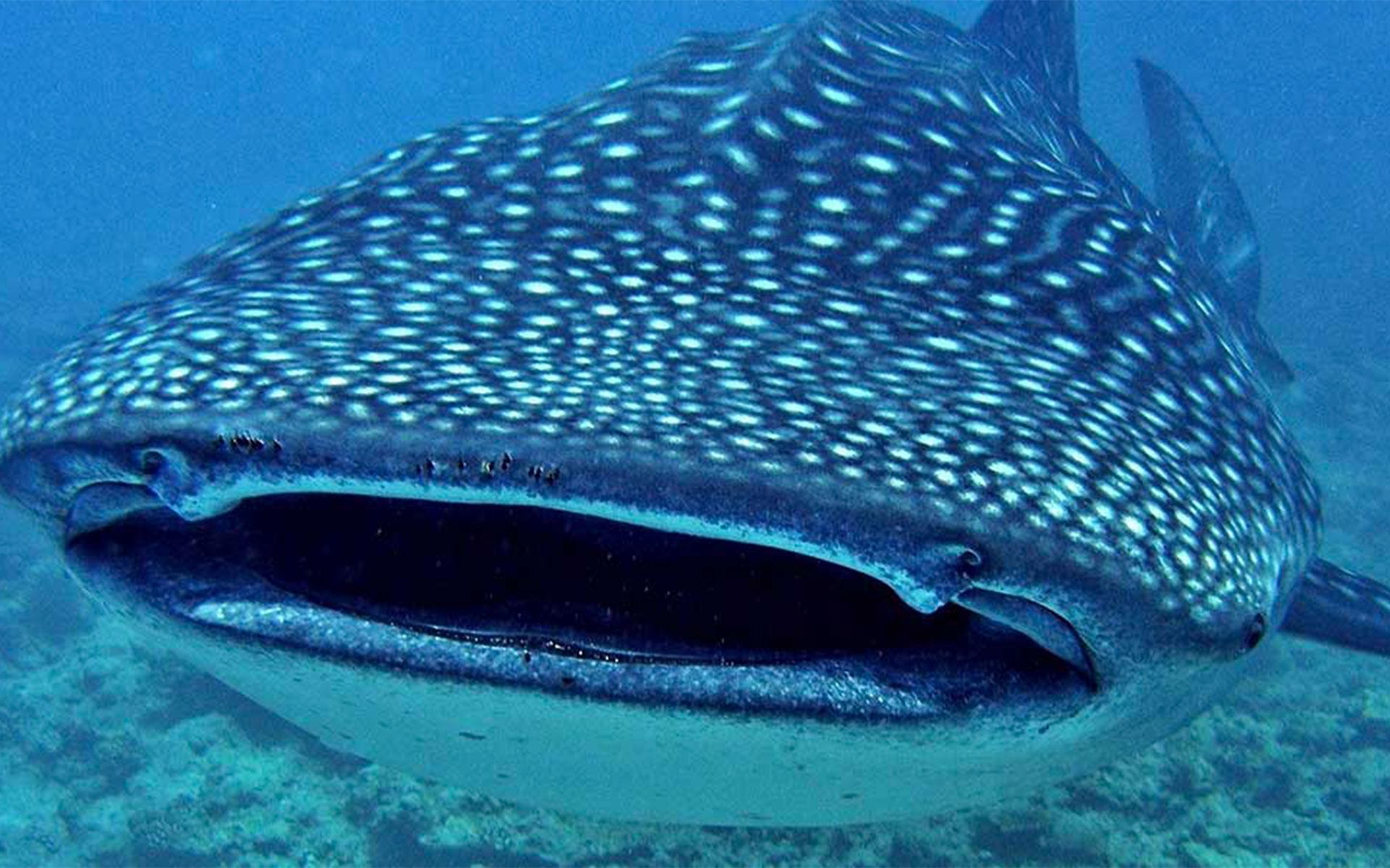 Maldives Marine Lab - The BIG FISH Network South Ari Atoll ...