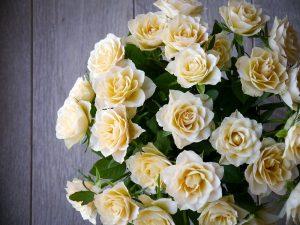 roses-2201473_1920
