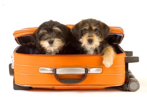 animali-in-valigia