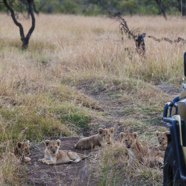 safari9-min