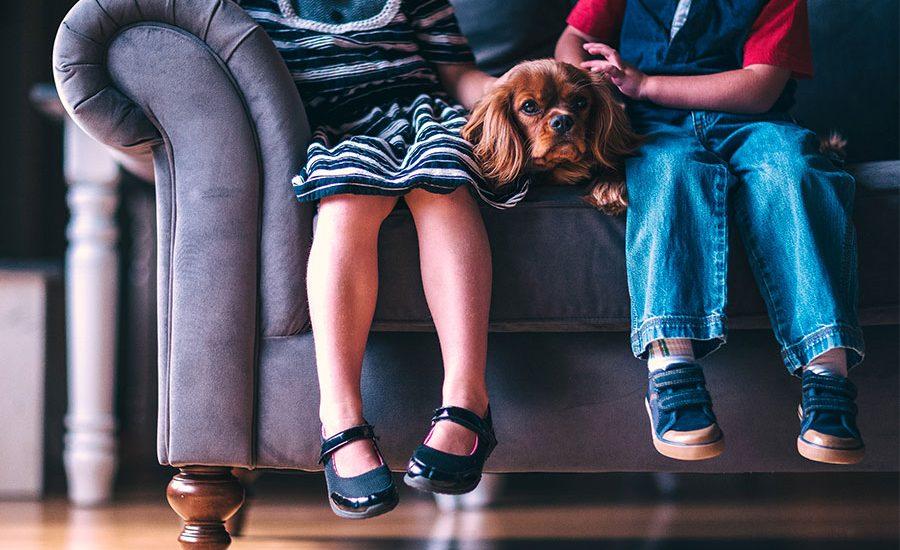 Babysitting & Dogsitting