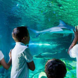 aquarium-sea-life-une-visite-a-faire-en-famille-a-deux-pas-de-lhotel-explorers