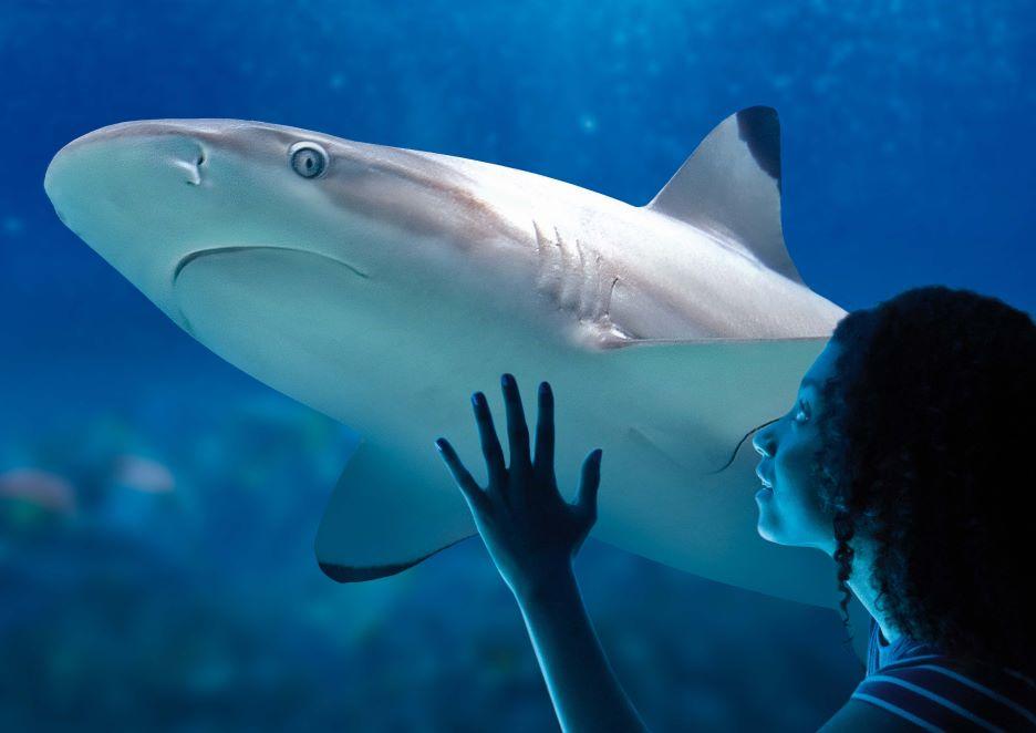 requin-pointe-noire-fille