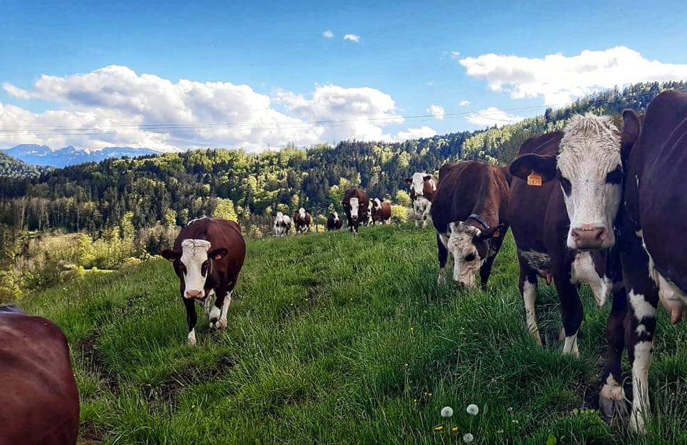 fermes élevage Haute-Savoie