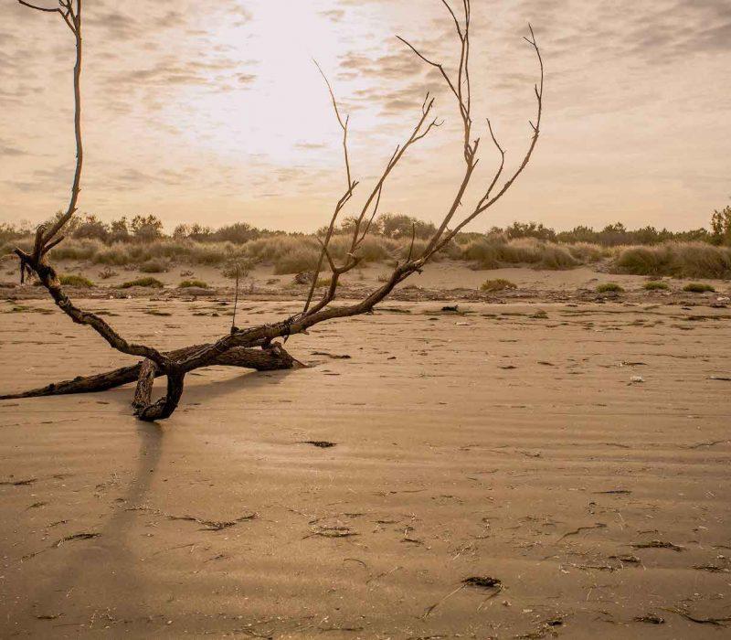La spiaggia degli Alberoni